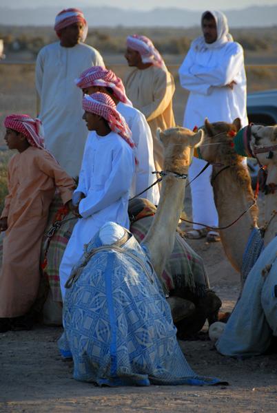 camel races, Oman