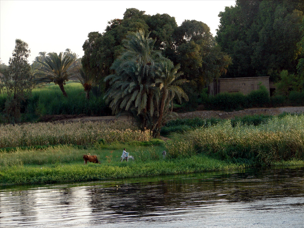 banks of the Nile, Egypt