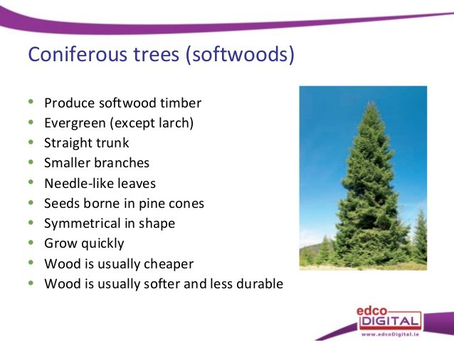 They have needles like coniferous trees, but they lose them in the fall like deciduous trees. Difference Between Coniferous Plywood And Deciduous Plywood