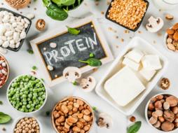 proteines-vegetales-alimentaires
