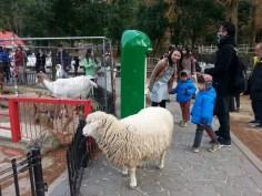 中間綠色的就是羊食自動販售機。這隻綿羊雖然背對著,但當有人買羊食的時候,他就會馬上衝過來了!很是狡猾!
