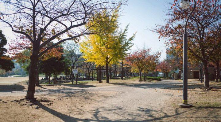 秋天的扇町公園真得很美喔~