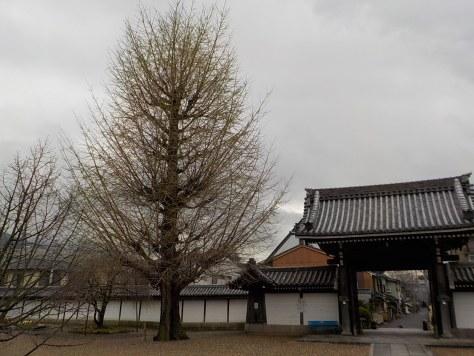 本堂前にある大きなイチョウの木は、区民の木になっています。