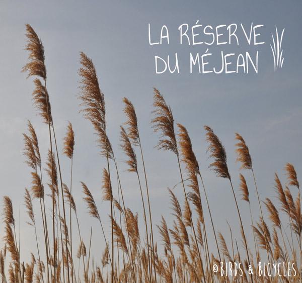 Roseaux de la Réserve du Méjean