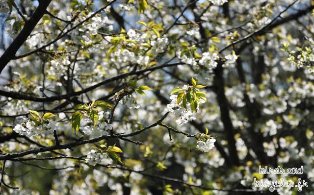Le printemps à Neuchâtel, au vallon de l'Ermitage
