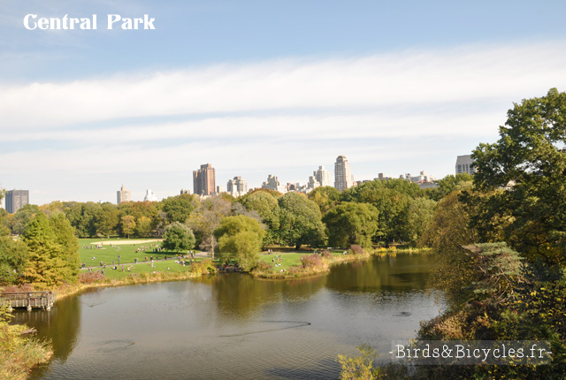 Central Park New-York