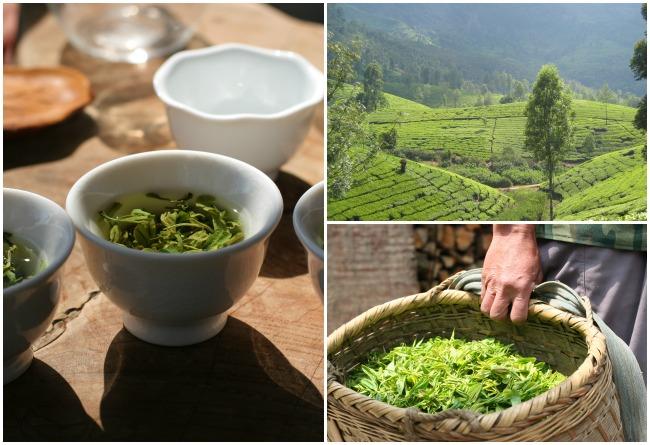 En quête de thés en Asie