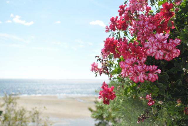 Fleurs à Tadoussac au Canada