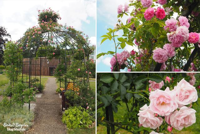 Roses à Nancy - Au parc de la Pépinière et au Jardin Botanique