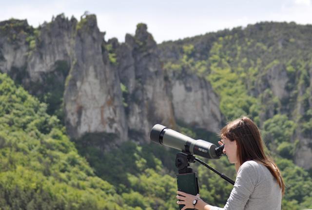 Observation vautours Cevennes