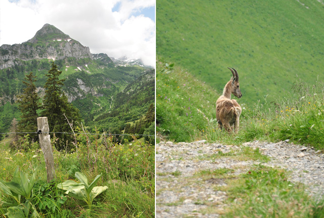 rando-sur-le-grammont-en-suisse