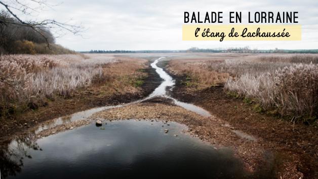 Idée de balade nature en Lorraine: l'étang de Lachaussée