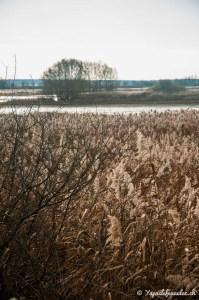 Découvrir la nature de la Lorraine autour des étangs de la Meuse