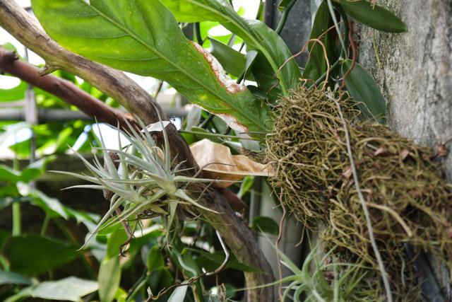 jardin-botanique-tessin-ile-brissago-12