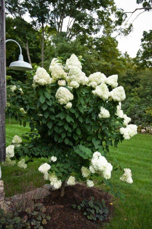 Ornamental garden, Washington CT
