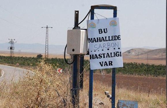 Ankara'da ŞARBON Karantinası!