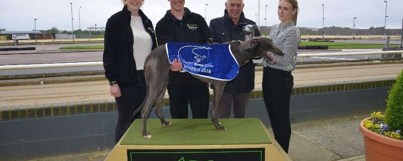 Greyhound photo