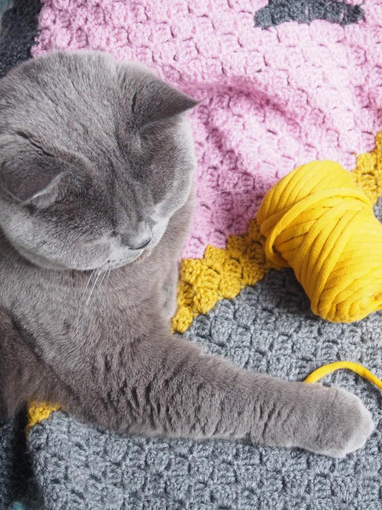 Schachenmayr Fashion Cotton Jersey, Häkelkorb, Curry, gehäkelt, Britisch Kurzhaar, Katze