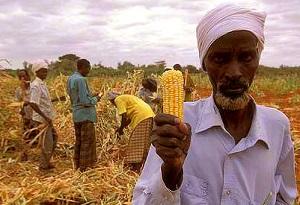 Kenyalı çiftçiler/Foto: Allie Wist