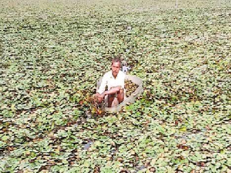 Bhopal talab singhade