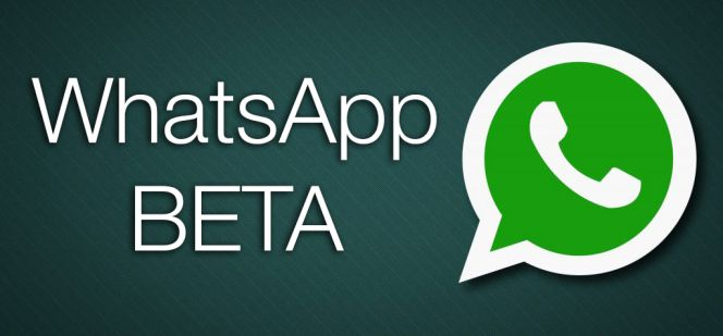 Image result for whatsapp beta