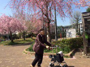 20150403学園もお花見に行ってきました!4