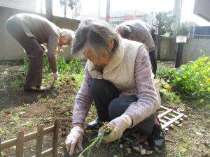 20150413利用者様とご一緒に、庭にお花を植えました!5