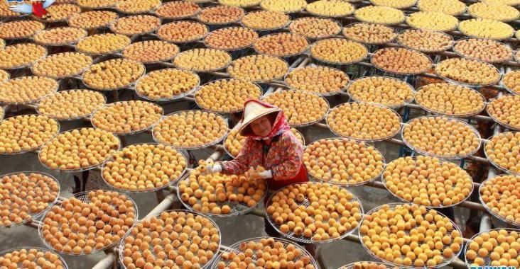 九降風起 衛味佳柿餅閃亮登場 – 新竹美食 @YA !野旅行-玩樂全世界