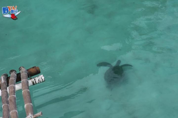 菲律賓北巴拉望科隆島 @YA !野旅行-吃喝玩樂全都錄
