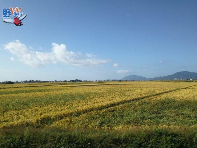 日本糧倉越州之光 金秋新潟魅力無限 @YA !野旅行-吃喝玩樂全都錄