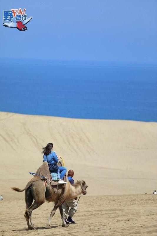 鳥取砂丘騎駱駝、品嚐限定美食感受沙漠風情 @YA !野旅行-吃喝玩樂全都錄