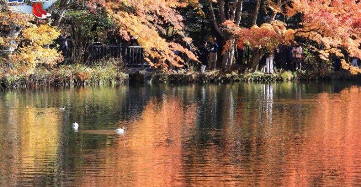 輕井澤老街散策 雲場池浪漫秋楓 @YA 野旅行-陪伴您遨遊四海