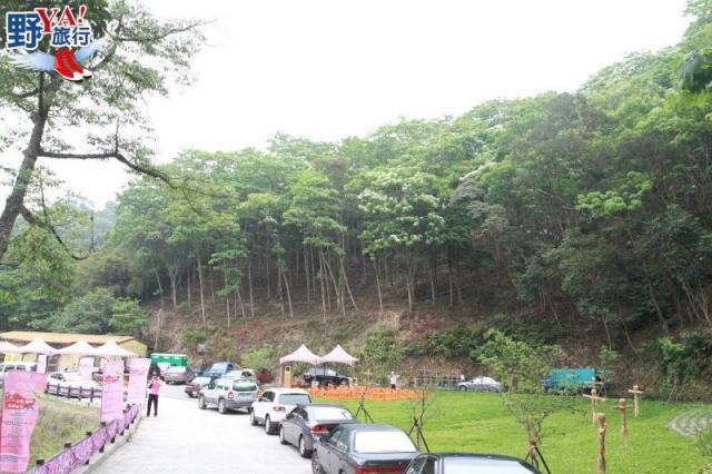 浪漫五月雪即將登場 頭屋夢幻桐花步道 @YA !野旅行-吃喝玩樂全都錄