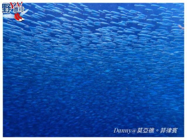 菲律賓宿霧潛水初體驗 令人震撼的莫亞礁沙丁魚風暴 @YA !野旅行-吃喝玩樂全都錄