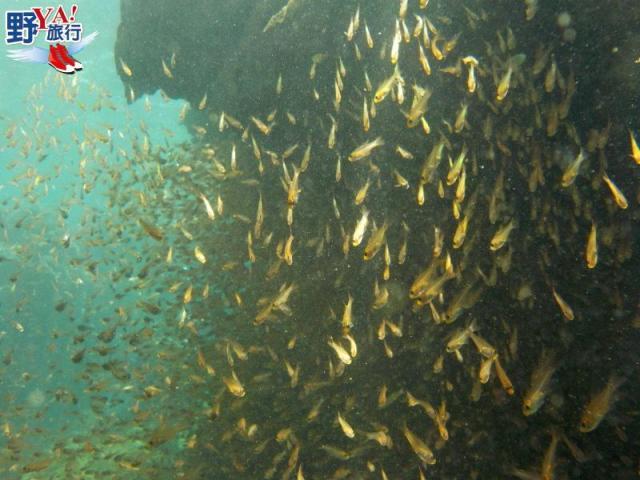 花蓮石梯坪PADI潛水訓練 體驗穿越魚牆的快感 @YA !野旅行-吃喝玩樂全都錄