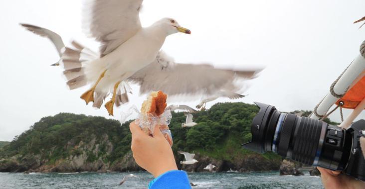 岩手、宮古|淨土之濱 搭船餵海鷗飽覽海岸風光 @YA 野旅行-陪伴您遨遊四海