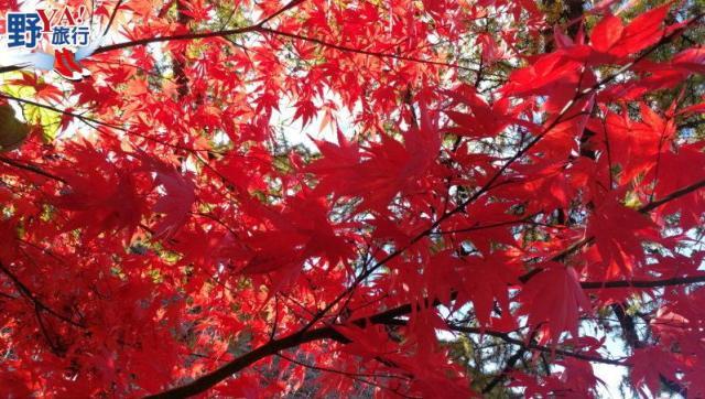 日本|北陸 白川鄉合掌村楓紅片片 無敵浪漫場景此生必訪 @YA !野旅行-吃喝玩樂全都錄