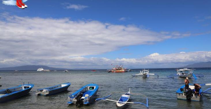 菲律賓|馬尼拉 海豚灣潛水之旅再續菲律賓情緣 @YA 野旅行-陪伴您遨遊四海