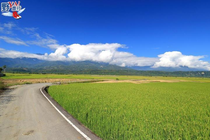 【阿勃勒黃金大道】浪漫的景觀公路 @YA !野旅行-吃喝玩樂全都錄