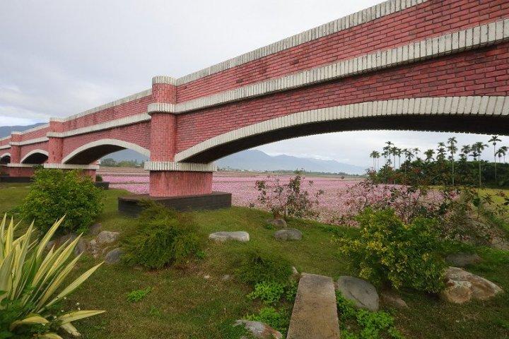 二層坪水橋超大波斯菊-台東花海-春節限定 @YA !野旅行-玩樂全世界