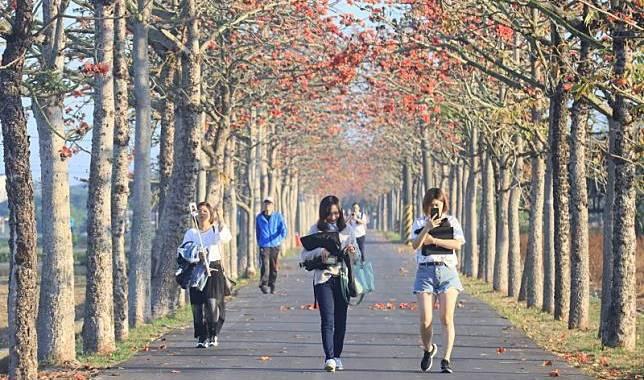 與春天最美麗的約定 台南白河林初埤木棉花道 @YA !野旅行-玩樂全世界
