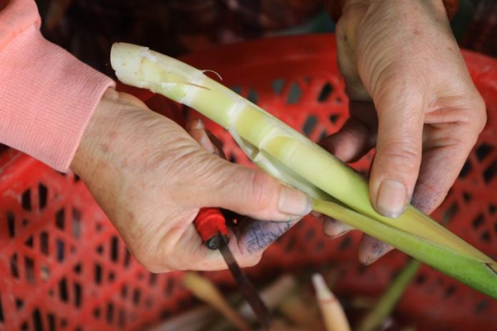 季節限定縱谷原住民美食 太巴塱箭筍美味上桌 @YA !野旅行-吃喝玩樂全都錄