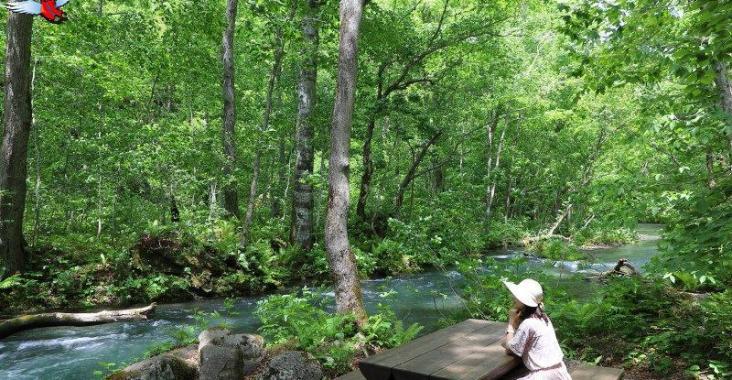 日本青森夢幻極景 青森奧入瀨溪流十和田湖散策 @YA 野旅行-陪伴您遨遊四海