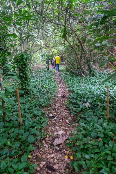 永安北岸濱海潟湖划獨木舟 探訪防風林裡亞馬遜祕境 @YA !野旅行-吃喝玩樂全都錄