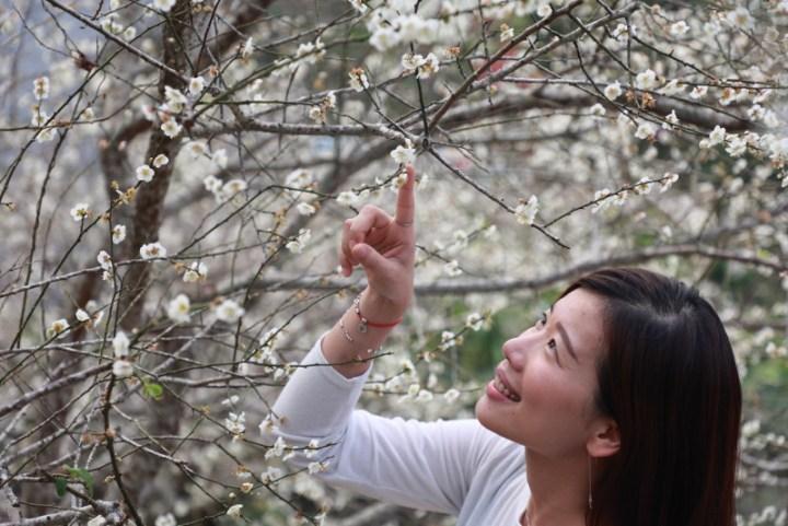 台南賞梅採果品嚐梅子料理 楠西梅嶺即將迎來梅花盛開期 @YA 野旅行-陪伴您遨遊四海