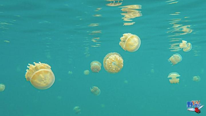 跟著KKDAY旅遊泡泡玩帛琉 擁抱Tiffany藍海洋風情 @YA 野旅行-陪伴您遨遊四海