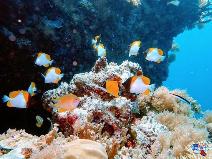 帛琉旅遊泡泡首發 再訪帛琉蔚藍漸層大海 @YA !野旅行-吃喝玩樂全都錄