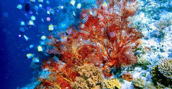 帛琉旅遊泡泡首發 再訪帛琉蔚藍漸層大海 @YA 野旅行-陪伴您遨遊四海