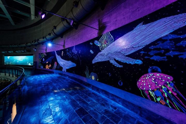 屏東海生館打造全新亮點 2021暑期活動「璀璨之海」閃耀登場 @YA !野旅行-吃喝玩樂全都錄