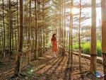 漫步粉紫花海浪漫輕旅行 玩樂楊梅做體驗品客家風情 @YA !野旅行-吃喝玩樂全都錄
